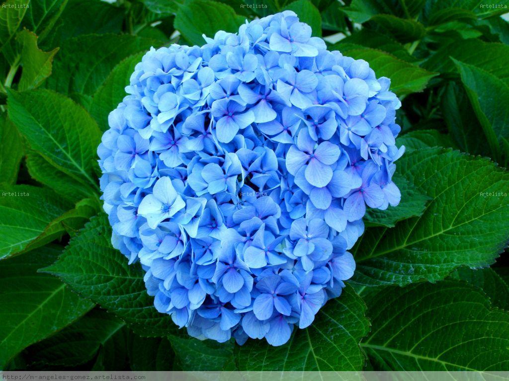 https://elennely.com.br/wp-content/uploads/2017/01/flor-azul-4.jpg