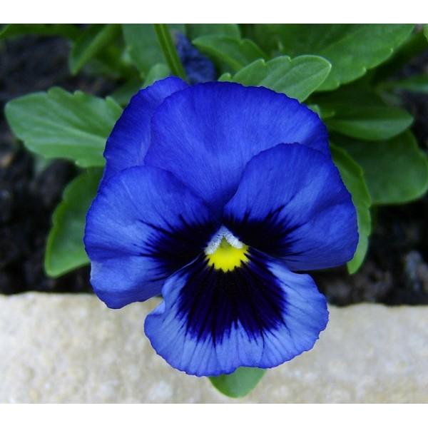 https://elennely.com.br/wp-content/uploads/2017/01/flor-azul-5.jpg